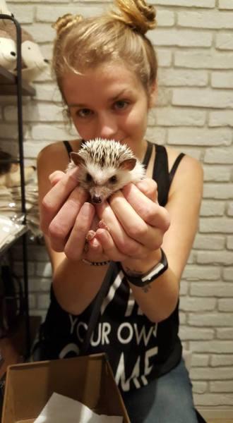 nicole-hedgehog